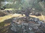 Agri Gallipoli