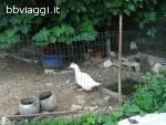 Agriturismo Nuvolino - Monzambano